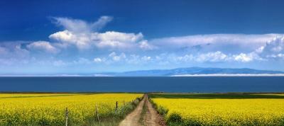 Terreno Agricolo in Vendita a Trezzo sull'Adda