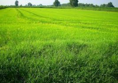 Terreno Agricolo in Vendita a Cornate d'Adda