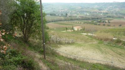 Vai alla scheda: Terreno Agricolo Vendita Ripatransone
