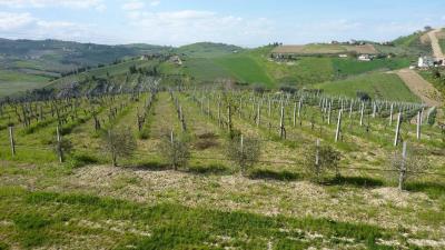 Terreno Agricolo in Vendita a Offida