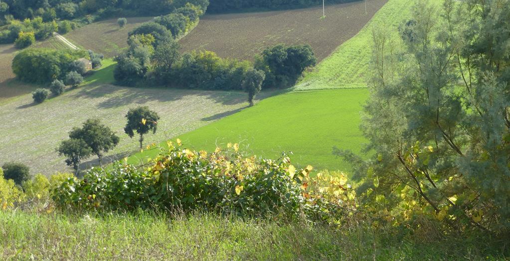 Casale a Montelupone (Macerata)