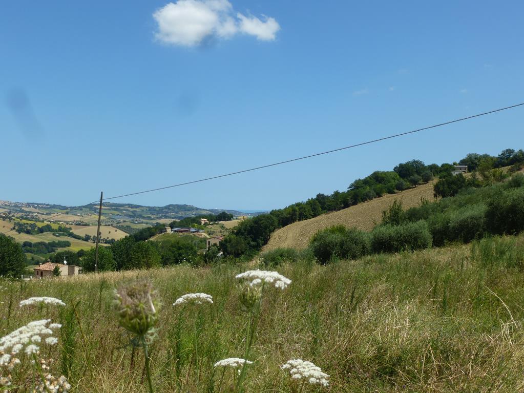Terreno edificabile a Morrovalle (Macerata)