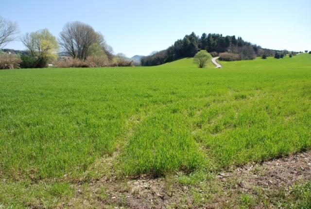Terreno Agricolo a Osimo (Ancona)