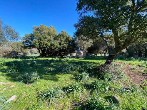 Vai alla scheda: Terreno Agricolo Vendita Telti