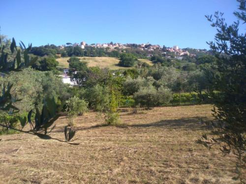 Terreno Agricolo in Vendita a Lanuvio