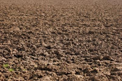 Terreno Agricolo a Sogliano al Rubicone