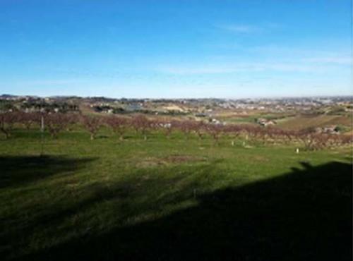 Terreno Agricolo a Longiano Località Balignano