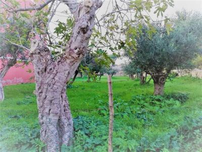 Terreno edificabile in Vendita a Marcellina