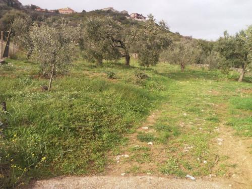 Terreno Agricolo in Vendita a Sant'Angelo Romano