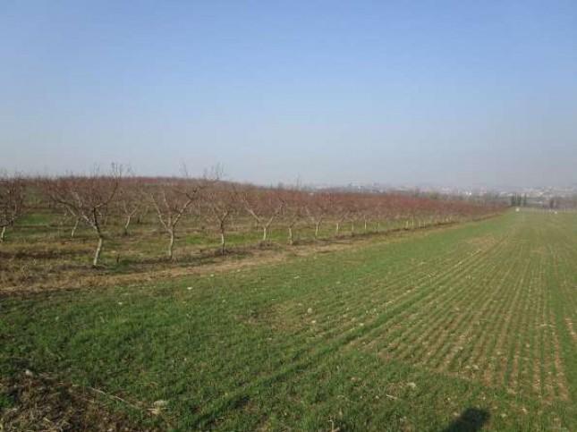 Terreno Agricolo in Vendita a Sommacampagna