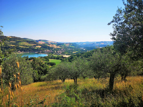 Agricultural Land for Sale to Caldarola