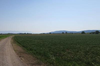 Terreno industriale in Vendita a Mariano del Friuli
