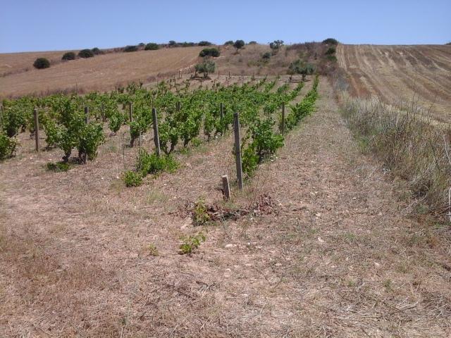 Terreno Agricolo in Vendita a Pimentel - Cod. Ac5