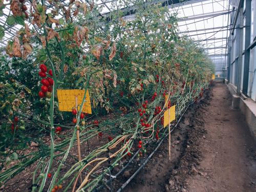 Terreno Agricolo in Vendita a Pula