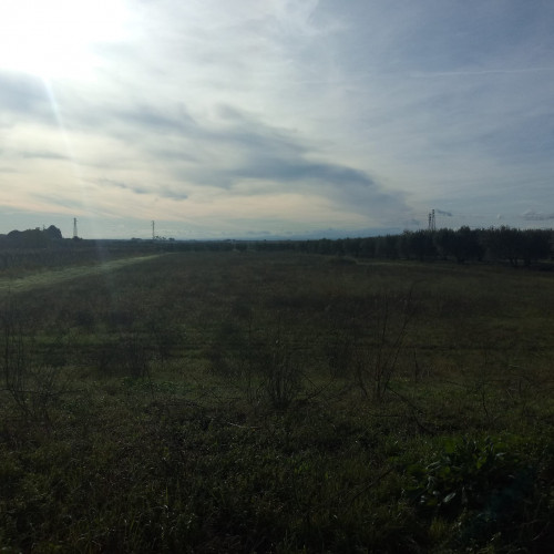 Vai alla scheda: Terreno Agricolo Vendita San Severo