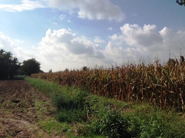 Terreno Agricolo in vendita a Cologno al Serio, 9999 locali, prezzo € 159.000 | CambioCasa.it