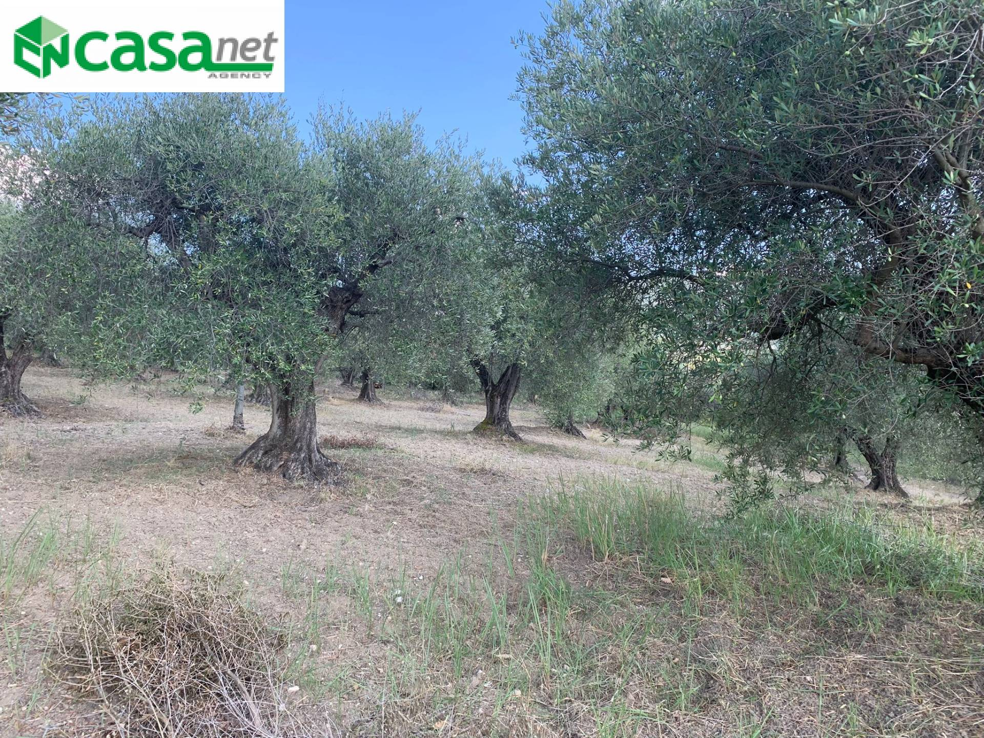Terreno Agricolo in vendita a Marcellina, 9999 locali, prezzo € 39.000   CambioCasa.it
